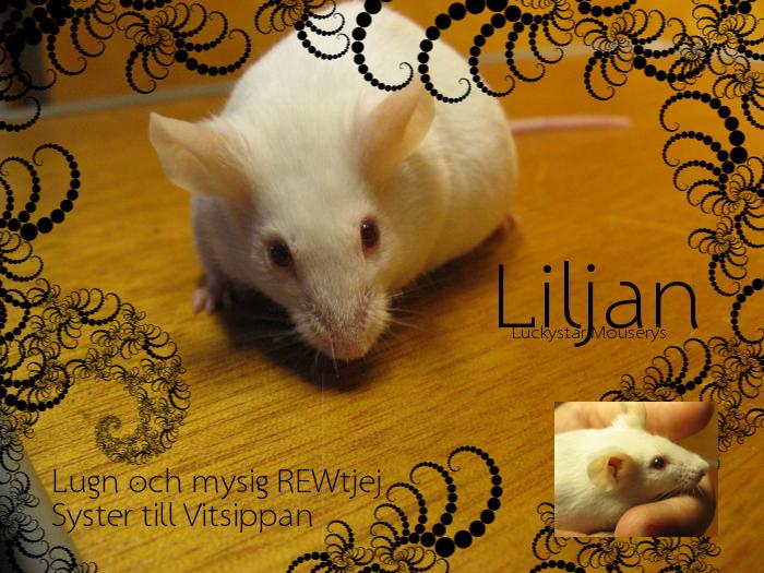 liljan